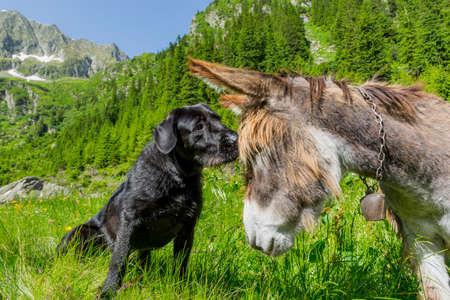 당나귀와 강아지